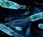 Бактерии делают топливо.